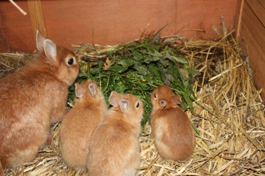 Unsere Kaninchen freuen sich auf ihre Kuscheleinheiten