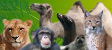 Zoo Park Arche-Noah